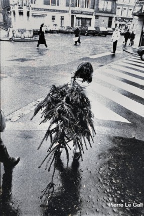 Pierre Le Gall Sapin 2